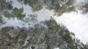 Widok z lotu ptaka zima marznący las zakrywający w śniegu Zdjęcie Royalty Free
