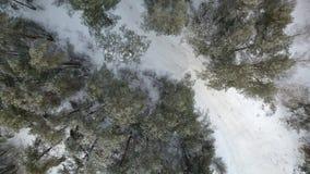 Widok z lotu ptaka zima marznący las zakrywający w śniegu Zdjęcia Stock