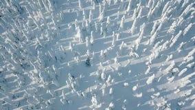 Widok z lotu ptaka zimna zima z udziałem śnieg i niebieskie niebo W Finlandia zima krajobraz zdjęcie wideo