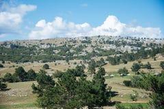 Widok z wierzchu góry Petri Zdjęcia Royalty Free