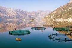 Widok zatoka Kotor blisko rybiego gospodarstwa rolnego na pogodnym zima dniu monte Obrazy Royalty Free