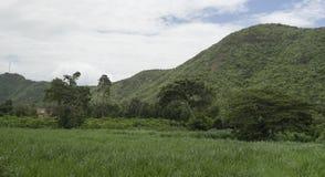 Widok zieleni pole, drzewo i zieleni góra z, niebieskim niebem i chmurą, selekcyjna ostrość, naturalny koloru obrazka styl Zdjęcia Royalty Free