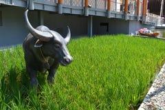 Widok zielony ryż obozuje z rzeźbą wołowa pozycja na nim Tajlandia pawilon fotografia stock