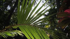Widok zielony tropikalny las z słońca belkowaty iść przez liści drzewko palmowe zdjęcie wideo