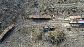 Widok zniszczony las po tornada, wylesienie zbiory