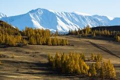 Widoki śnieżne granie Altai góry w Altai republice Fotografia Stock