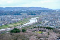 Widoki czereśniowi okwitnięcia przy Shiroishi RiversideHitome Senbonzakura, tysiąc czereśniowi drzew przy lub Zdjęcie Stock