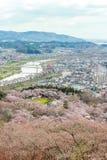 Widoki czereśniowi okwitnięcia przy Shiroishi RiversideHitome Senbonzakura, tysiąc czereśniowi drzew przy lub Zdjęcia Stock