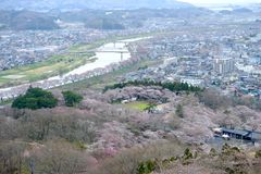Widoki czereśniowi okwitnięcia przy Shiroishi RiversideHitome Senbonzakura, tysiąc czereśniowi drzew przy lub Zdjęcia Royalty Free