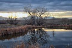 Widoki Josh's Stawowa chodząca ścieżka, Odbija zmierzch w Broomfield Kolorado otaczający ożypałkami, równiny i Skalistej góry l obrazy stock