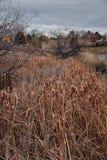 Widoki Josh's Stawowa chodząca ścieżka, Odbija zmierzch w Broomfield Kolorado otaczający ożypałkami, równiny i Skalistej góry l obraz stock