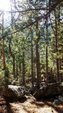 Widoki las podczas trekking przejażdżki zdjęcia stock