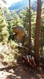 Widoki las podczas trekking przejażdżki Fotografia Stock