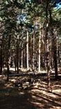 Widoki las podczas trekking przejażdżki Obraz Royalty Free