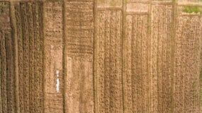 Widoki ogród od Ogrodowa tekstura zdjęcia stock