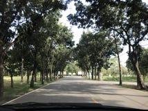 Widoku drzewo i niebo Fotografia Royalty Free
