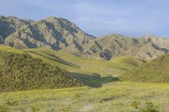 Widoku górskiego i spektakularny pustynny złoto i różnorodna wiosna kwitniemy południe piec zatoczka w Śmiertelnym Dolinnym parku obraz royalty free