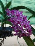 Widoku kwiat Zdjęcia Stock