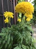 Widoku kwiat Obrazy Stock