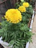 Widoku kwiat Zdjęcia Royalty Free