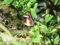 Widoku motyl przy Dżakarta Zdjęcie Royalty Free