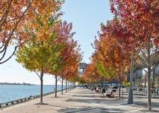 Widoku sezon jesienny w mieście Fotografia Royalty Free