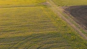 Widoku z lotu ptaka pole Zako?czenie Rolnictwo zbiory wideo