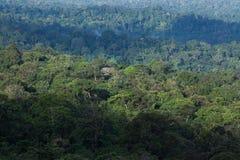 Widoku z lotu ptaka wiecznozielony las w ranku świetle Sceneria antyczny tropikalny las, cień, mgła bujny w porze deszczowej i zi obrazy stock