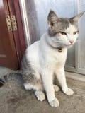 Widoku zwierzęcia kot Fotografia Stock