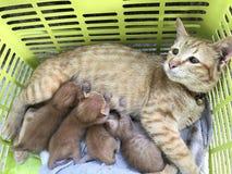 Widoku zwierzęcia kot Fotografia Royalty Free