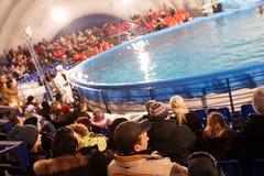 widowni dolphinarium Zdjęcia Stock