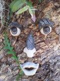 Widzieć drzewa Zdjęcie Stock