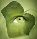 Widzii zieleń Obraz Stock