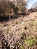 wieś ciekawi kształtne traw płochy w polu popierać kogoś Obrazy Stock