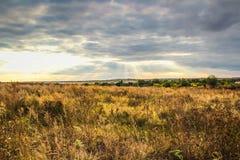 Wieś i koloru żółtego pole Zdjęcie Royalty Free