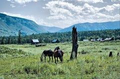 wieś koń Obraz Stock