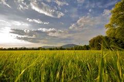 wieś krajobraz Fotografia Royalty Free