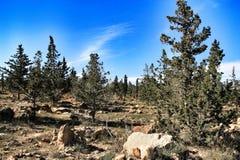 Wieś krajobraz z autochtonów conifers i krzakami obraz royalty free