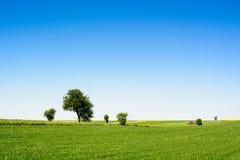Wieś krajobraz z drzewami i zieloną łąką fotografia royalty free