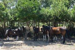 Wieś krajobraz z grupą konie Obrazy Royalty Free