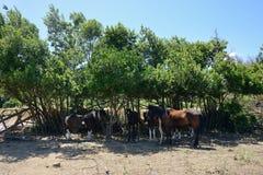 Wieś krajobraz z grupą konie zdjęcia royalty free