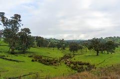 Wieś krajobraz zielonej trawy i drzew padok obraz royalty free