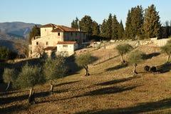wieś krajobrazu Tuscan typowy gospodarstwo rolne dom w Tuscany z drzewami oliwnymi, cyprysem i krowami, Włochy Zdjęcie Stock