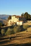 wieś krajobrazu Tuscan typowy gospodarstwo rolne dom w Tuscany z drzewami oliwnymi, cyprysem i krowami, Włochy Zdjęcia Royalty Free