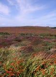 wieś kwitnie łąki rośliien widok Fotografia Royalty Free