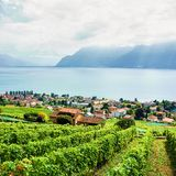 Wieś Lavaux winnicy tarasy wycieczkuje ślad Szwajcaria Zdjęcie Stock