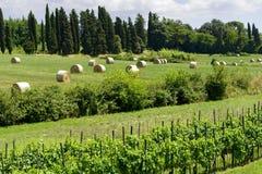 Wieś Lucca Tuscany, Włochy (,) Zdjęcia Stock