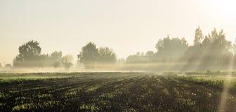 Wieś widok, mgła w ranku, słońce promienie fotografia stock