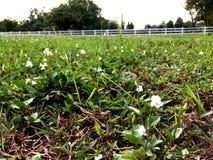 Wieś z zieloną trawą zdjęcie stock
