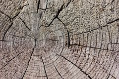 Wieśniak wietrzejący promieniowy drewno adry tło Obraz Stock